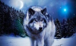 Чоно хөөсөн шөнө