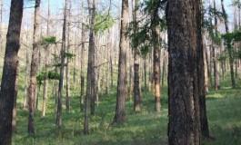Улсын хэмжээнд ой, хээрийн түймэргүй байна