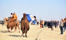ДОРНОГОВЬ: Тэмээн поло, Атан тэмээний уралдаан боллоо